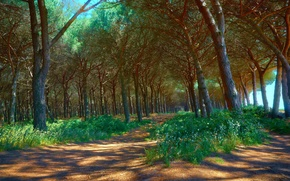 forest, trees, road, nature