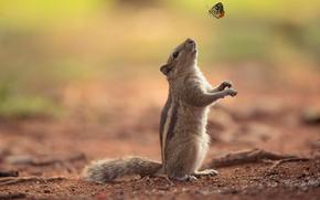 scoiattolo, amicizia, farfalla