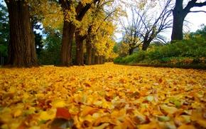 forêt, nature, route, feuillage, automne, parc, arbres