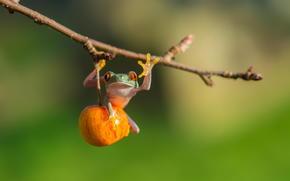 apple, frog