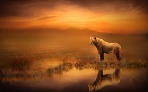 leonessa, riflessione, Art