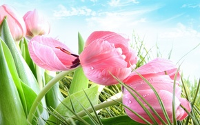 Flowers, SPRING, pink, TULIPS, grass