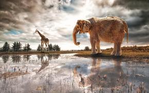 фантазия, слон, река, арт, жираф
