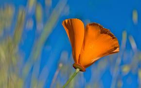 Blütenblätter, Orange, Blume