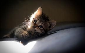 улыбка, лапка, котенок