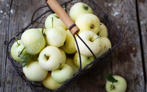 harvest, autumn, fruit, apples, basket