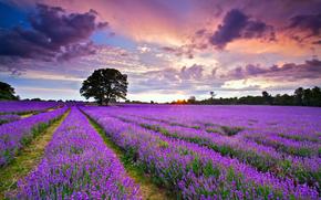 небо, облака, Июль, Англия, лаванда, закат, Великобритания, лето, вечер, солнце, поле
