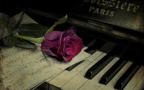 пианино, винтаж, цветок, роза, ноты