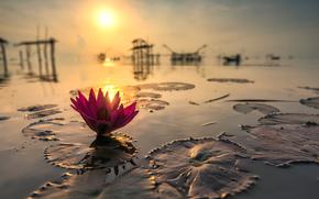 タイ, 太陽, リフレクション, 蓮