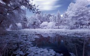 riflessione, acqua, pond, alberi, lavorazione