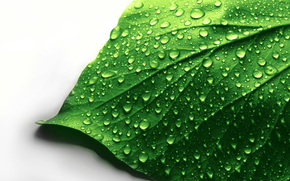 Macro, white background, drops, list, Green, water
