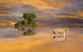 nature, tiger, Palms, clouds, sky, rock, landscape, water