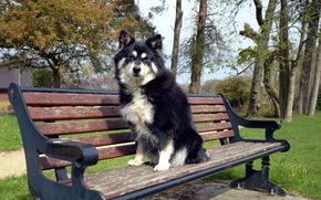 bench, dog, friend