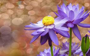 пузыри, фон, водяные лилии, цветы