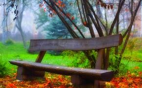 panca, natura, autunno, fogliame, foresta, Tour, alberi, erba, parco