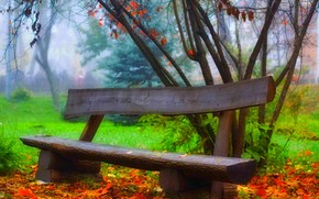 bench, nature, autumn, foliage, forest, tour, trees, grass, park
