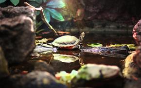 tartaruga, animale, ben, acqua, Turtle, Zoo, bellezza, magia, pond