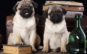 собаки, книги, мопсы, чемодан, бутылки