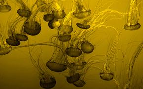 фон, много, медузы