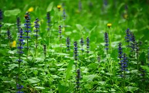 SPRING, 植物, フラワーズ, 林間の空き地, ロシア, 森, 草, 自然