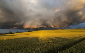 тучи, Великобритания, Северный Йоркшир, Июль, Англия, вечер, перед штормом, солнечный свет, поле, небо, лето