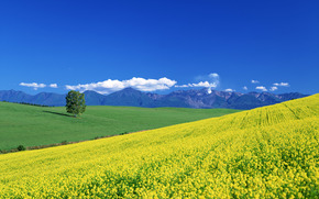 meadow, valley, summer, tree, Mountains, clouds