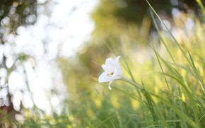 claro, deslumbramiento, Macro, blanco, hierba, verano, plantas, calor, luz, flor, naturaleza, sol