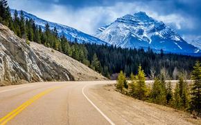 пейзаж, Альберта, поворот, скалы, лес, деревья, Канада, Национальный парк Джаспер, дорога, горы, ели