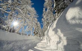 мороз, сугробы, снег, солнце, деревья