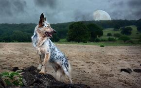фон, природа, собака