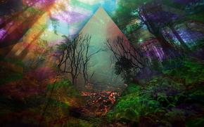 COLOR, bosque, abstracción, línea, árboles