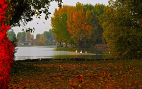 Mantua, lake, Lombardy, foliage, Italy, photo, nature, autumn