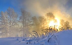 morning, sun, winter, nature, snow