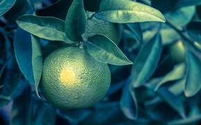 follaje, naranja, Verde
