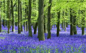 forest, summer, trees, Flowers, trunks