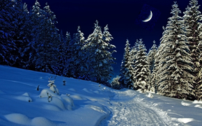 nature, forest, winter, evening