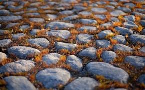 moss, degradation, stones
