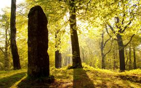 forest, post, stone, England, light, Somerset, sun, Beacon Hill, trees