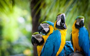 Pappagalli, uccelli, piumaggio