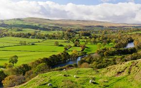 fiume, campo, alberi, Colline, cielo, Pecora