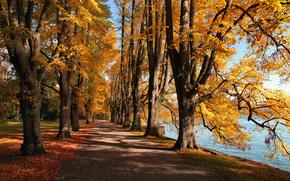 parque, otoño, lago, follaje