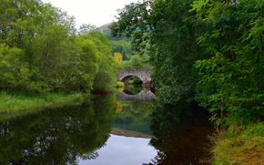 rzeka, most, drzew, charakter