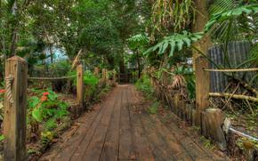 сад, парк, деревья, природа