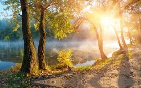 sole, paesaggio, luce del sole, fogliame, bellissima natura, Alberi di autunno