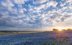 Bluebonnet Sunrise, Ennis, Texas