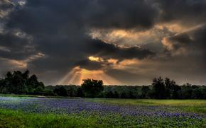 поле, тучи, деревья, пейзаж, закат