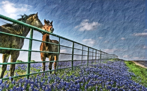 campo, cavallo, cielo, nuvole