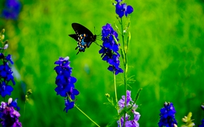 rośliny, Kwiaty, motyl, Macro