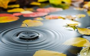 листья, лужа, осень, капля, вода