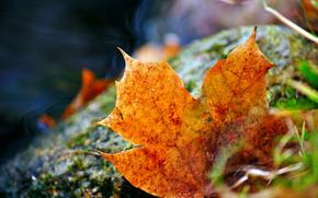 лист, трава, осенний, опавший
